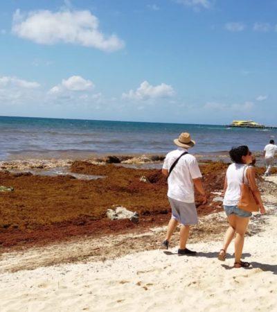 Ante recale masivo de sargazo en Playa del Carmen, empresarios exhortan a los tres niveles de gobierno para actuar eficazmente contra el fenómeno