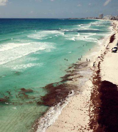 SIN RECURSOS Y EL SARGAZO SIGUE LLEGANDO: Playas de Cancún y la Riviera Maya sufren recale masivo del alga y los esfuerzos por contenerla son insuficientes