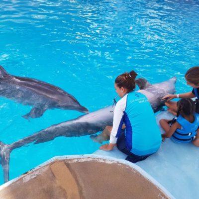 Asociaciones civiles, autoridades y empresas preparan terapias asistidas con delfines para grupos vulnerables de Cancún