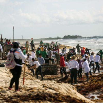 Pedro Joaquín y 250 trabajadores del Ayuntamiento de Cozumel, se unen para recoger sargazo y mantener limpias las playas de la isla