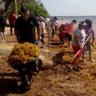Recogen sargazo de las playas del sur de Quintana Roo