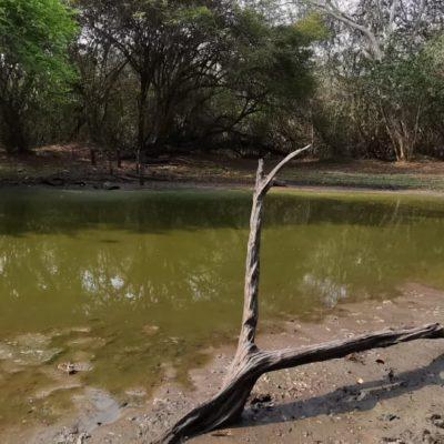 Habitantes de El Naranjal, piden ayuda a autoridades para rescatar la aguada que está a punto de secarse, por altas temperaturas