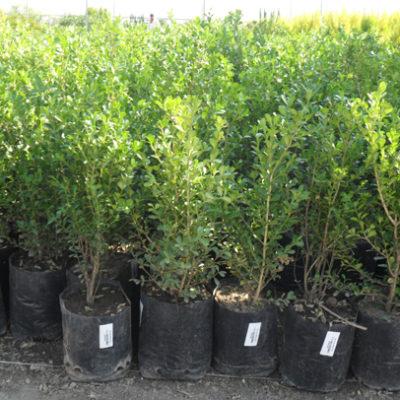 Hacen obligatorio un árbol por casa en Mérida; quien no cumpla enfrenta sanción hasta por mil 576 pesos