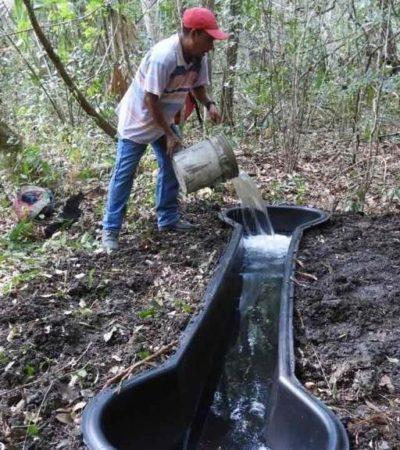 Alertan por mortandad de animales en la reserva de Calakmul por sequía e incendios forestales