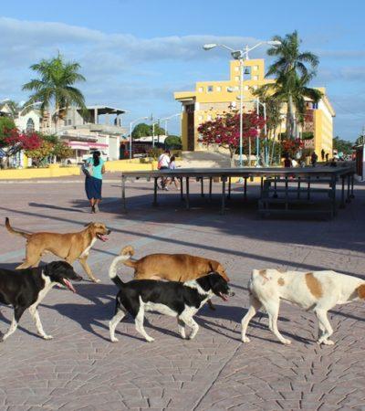 Denuncian activistas incremento en exterminio de perros y gatos callejeros en Campeche