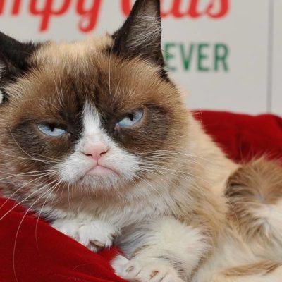 Muere Grumpy Cat, estrella de los memes y famosa por su ceño fruncido