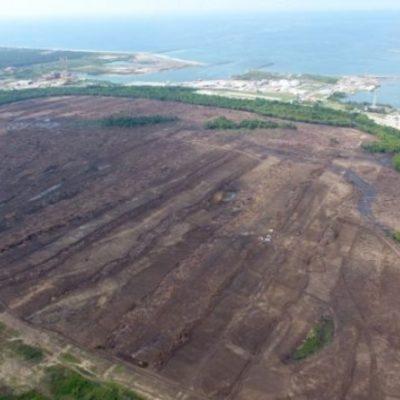 Urge revelar multas impuestas por desmonte del predio donde se construirá refinería en Dos Bocas