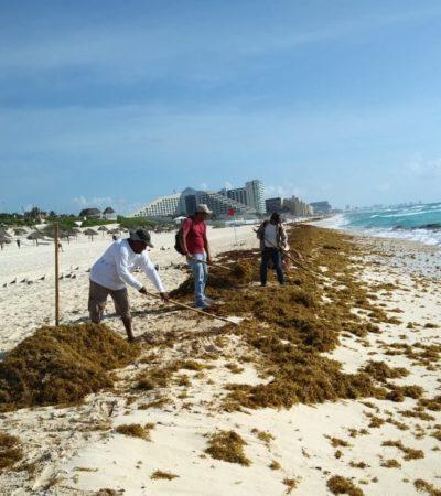 Empresarios piden destinar recursos para trabajos de recoja de sargazo, ya que prevén arribo de 24 millones de metros cúbicos a playas de QR durante este 2019