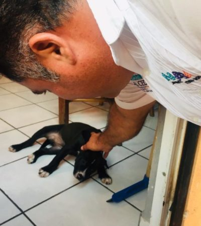 Ismael Sauceda impulsará la creación de mesas especializadas en la FGE para recibir denuncias de maltrato animal