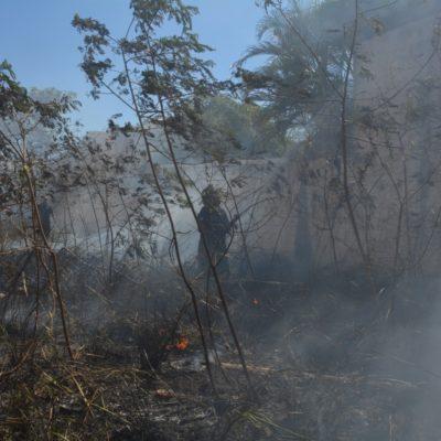 Durante incendios forestales, en José María Morelos se perdieron más de 100 hectáreas de selva