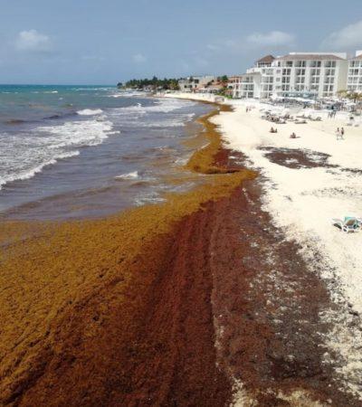 Ahuyenta el sargazo a viajeros; cambian el Caribe por destinos en el Pacífico