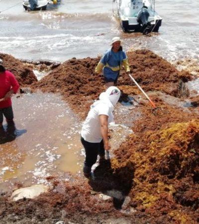Se unen ciudadanos, gobierno, empresarios y asociaciones civiles para limpiar el sargazo de playas de QR