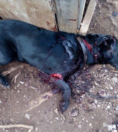 Sujeto mata a perro a machetazos en Cancún, pero Fiscalía se negó a actuar