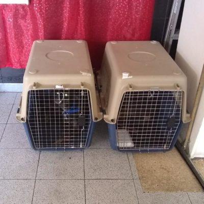 Buscarán a dueños de dos perros que llegaron el domingo a Cancún en ADO, procedentes de Pachuca y que nunca fueron reclamados