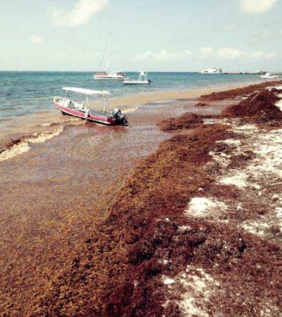 Empresarios de la Riviera Maya proponen que barcos camaroneros se hagan cargo del sargazo