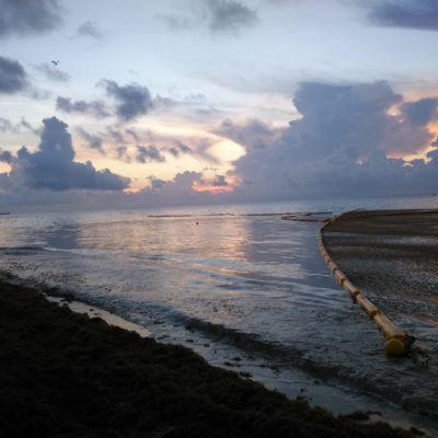Implementa Gobierno del Estado el Protocolo Emergente para la Atención del Sargazo de Quintana Roo