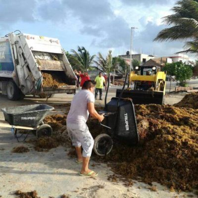 Piden senadores morenistas auditar 240 mdp otorgados a Quintana Roo para combatir sargazo en 2018
