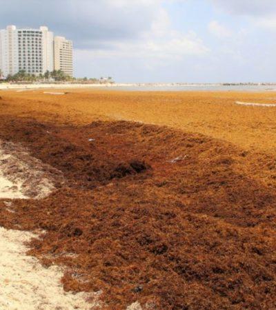 GALERÍA   Playas de Cancún registran arribo masivo de sargazo