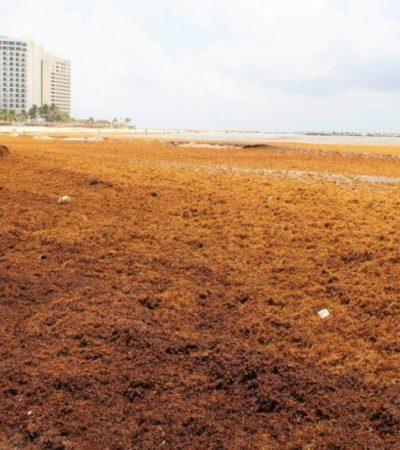 El sargazo no ha afectado la calidad del agua y las playas mantienen los distintivos Blue Flags