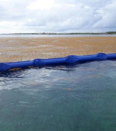 Propone Universidad Autónoma de Tamaulipas 'tubería' submarina que descargue el sargazo a 100 metros bajo el mar