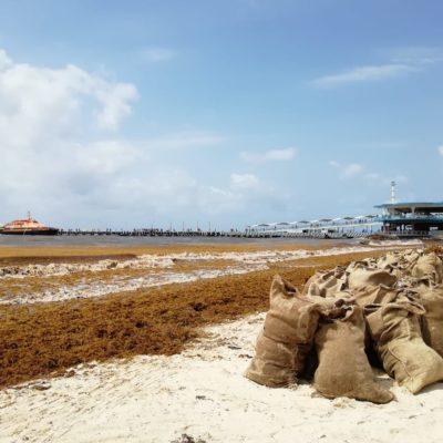 Herdez y el Acuario de Playa se suman a la limpieza de arenales en Solidaridad