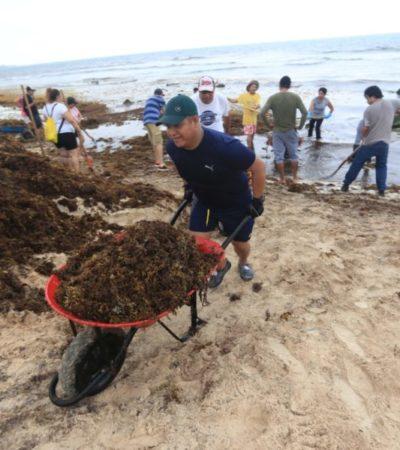 Se recolectan más de cien toneladas de sargazo en jornada de limpieza de playas en Solidaridad