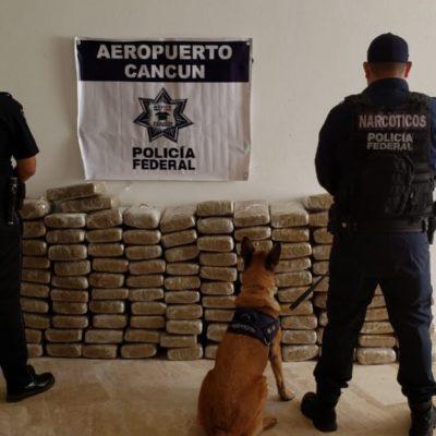 ASEGURAN 102 KILOS DE MARIHUANA EN CANCÚN: Proveniente de Jalisco, encuentran cargamento de droga en una empresa de mensajería