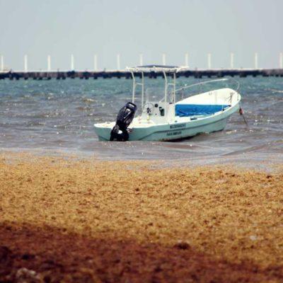 Reconoce Acluvaq que previo a viajar, turistas preguntan la situación ambiental por sargazo en las playas