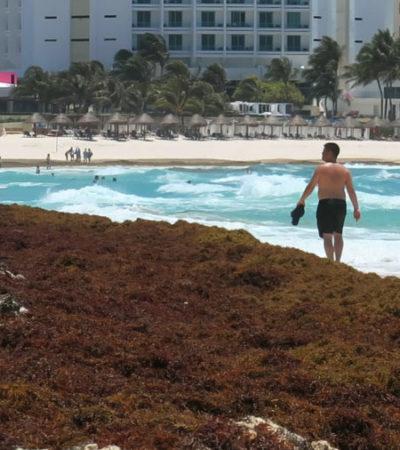 Reconocen deficiencias en la disposición final del sargazo y falta de recursos para combatir recale masivo del alga en QR