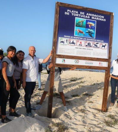 Refuerzan programa de protección de tortugas marinas en Puerto Morelos