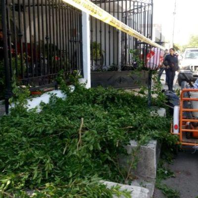 Fallece sexagenario tras caer de tres metros mientras realizada labores de jardinería en Chetumal