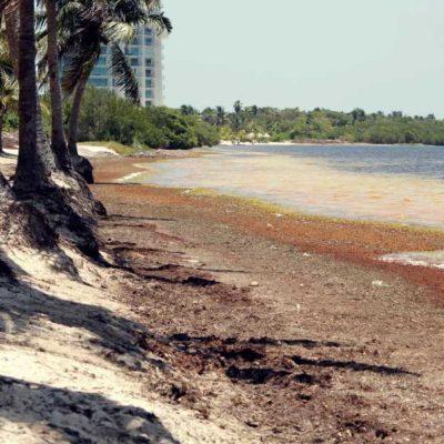 ALCANZAN 26 ACUERDOS PARA ENFRENTAR REGIONALMENTE AL SARGAZO EN EL CARIBE: Concluye en Cancún encuentro de alto nivel de 13 países para combatir el recale masivo del alga