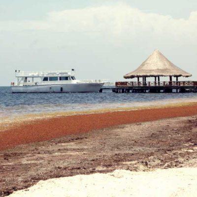 Advierte especialista contra el mal manejo en la recolección del sargazo que está provocando erosión de playas