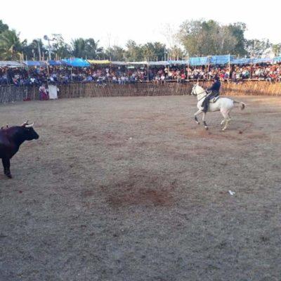 Congreso de QR aprueba Ley de Bienestar Animal que prohíbe las corridas de toros y peleas de gallo en la entidad