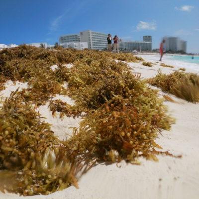 'TIRAN' 800 MDP EN LUCHA ANTISARGAZO: Para la Marina, el dinero gastado con EPN para combatir el recale del alga no sirvió para nada