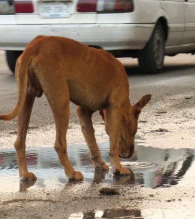 Cancún registra más de 50 mil perros y gatos en condición de calle debido a la falta de cultura y respeto de la vida animal