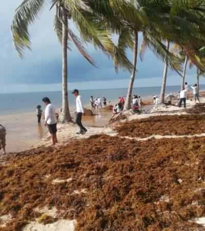 Persiste el arribo masivo de sargazo en principales playas de Cancún