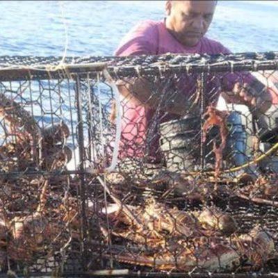 Por presencia de sargazo, pescadores de Tulum registran poca presencia de langosta