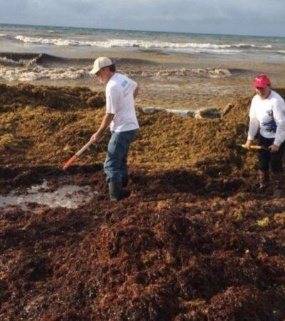 Preocupa a la Iniciativa Privada de Tulum la contaminación del sargazo al subsuelo