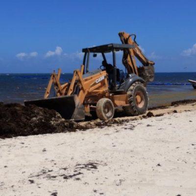 Autoridades reconocen que uso de maquinaria pesada para retirar sargazo sí impacta arenales