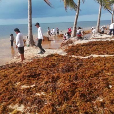 ESPERAN MENOS SARGAZO DE LO PRONOSTICADO: Inicia hoy en Cancún encuentro de alto nivel para la atención del problema del recale de la macro alga