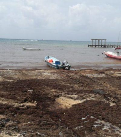 Se convierte playa 'El Recodo' en el punto costero más crítico de Solidaridad por recale masivo de sargazo