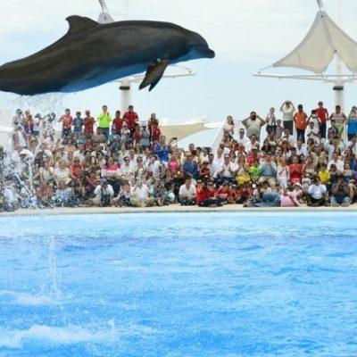 DEJAN FUERA A DELFINARIOS DE LEY DE BIENESTAR ANIMAL: Protección de mamíferos marinos no fue contemplada en nueva legislación en Quintana Roo
