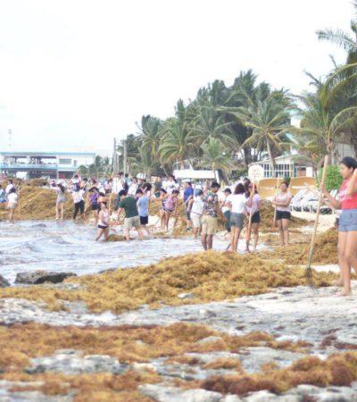 Suman 22 brigadas masivas de limpieza de sargazo en las playas de Quintana Roo