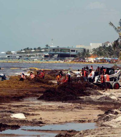 EXIGEN A AMLO FRENAR LLEGADA DE SARGAZO: Advierten que no hay coordinación efectiva para enfrentar el recale masivo del alga en Quintana Roo