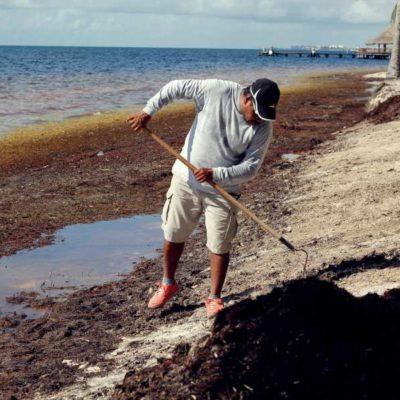 Sargazo continúa recalando en grandes cantidades, pese a esfuerzos de autoridades de mantener limpias las playas de Cancún