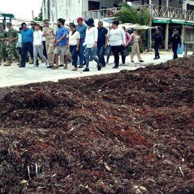 RECORRE SEMAR COSTA MAYA PARA DIAGNOSTICAR ARRIBO DE SARGAZO: Constatan playas limpias y problema de acumulación del alga en la orilla
