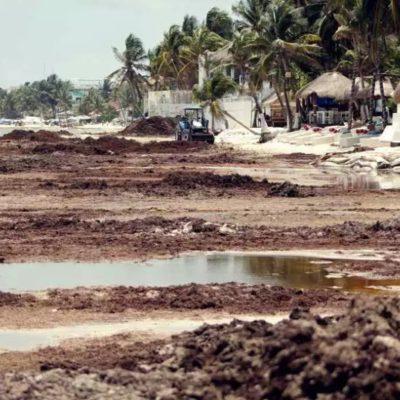 Preocupa al sector empresarial la falta de acciones contra el sargazo en Playa del Carmen