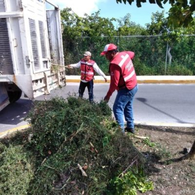 Ayuntamiento de Isla Mujeres trabaja en limpieza y embellecimiento de áreas verdes