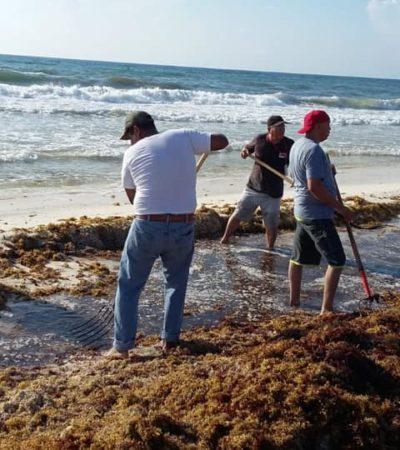 Infractores tienen la opción de pagar sus multas limpiando el sargazo en playas de Cancún